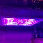 600W Honorsen Full Spectrum Led Grow Light with Veg and Bloom Switch